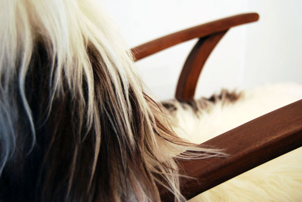 A close up of a mid century armchair upholstered with extra long and shaggy sheepskin